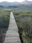 Boardwalk to Bierstadt.