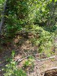 A nice Cascades trail.