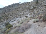 Runnable desert trail