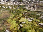 Moss carpet on Matterhorn