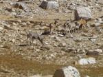 Herd of deer below Lake South America